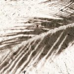 Weekend perfection  palm tree shadows and sand between ourhellip