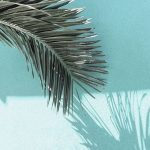 Colour inspiration  birdandknoll summer colour inspiration mood aqua palmtreeshellip