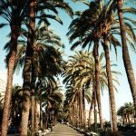 Strolling down palm lined streets in the LA sunshine betweenhellip
