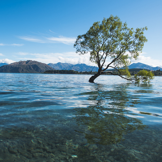 Exploring Wanaka, New Zealand with Citizens of the World